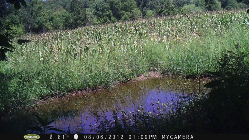 mineral pond or water hole food plot PICT0040