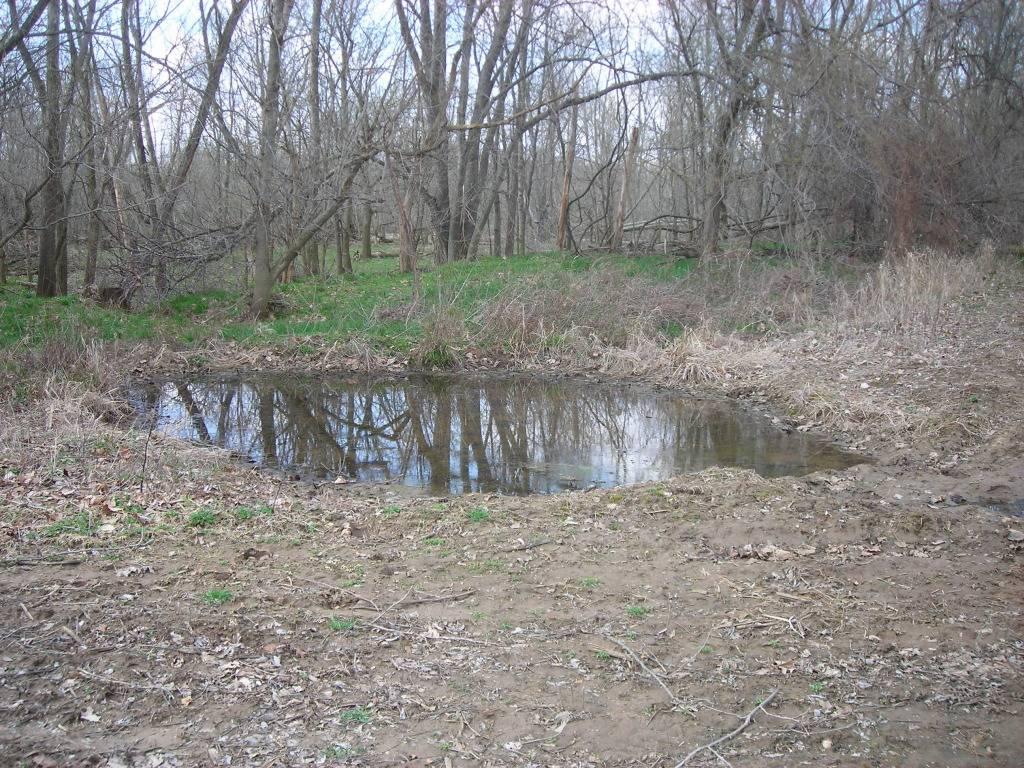 mineral pond or water hole food plot DSCN6040