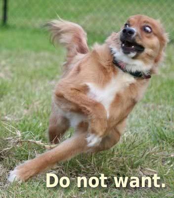 Missing Nin Do-not-want-dog