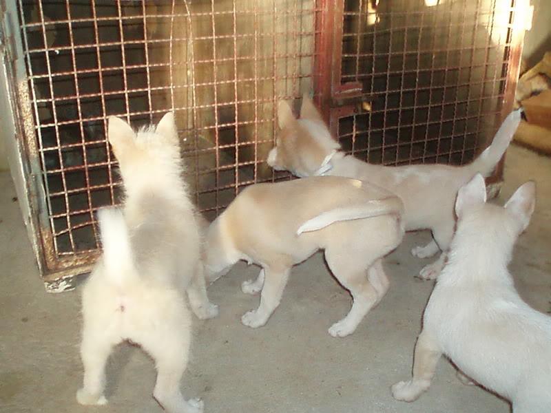Cachorros P1010141-1