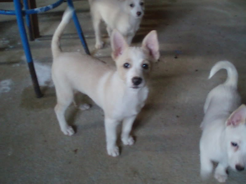 Cachorros P1010142