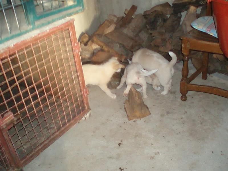Cachorros P1010147