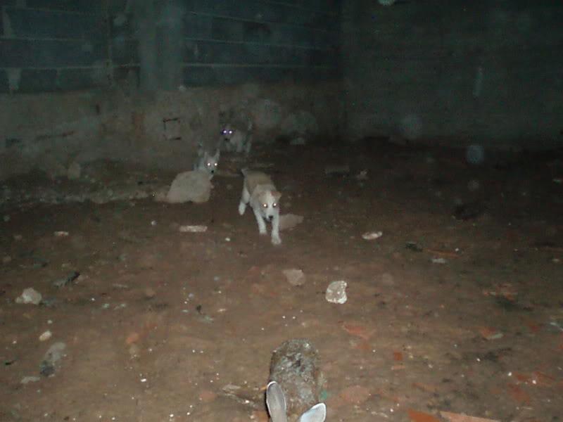 Cachorros P1010152