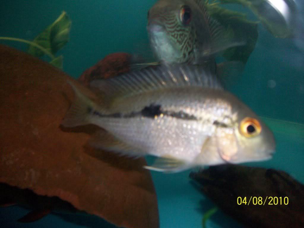 Mis peces 100_2872-1