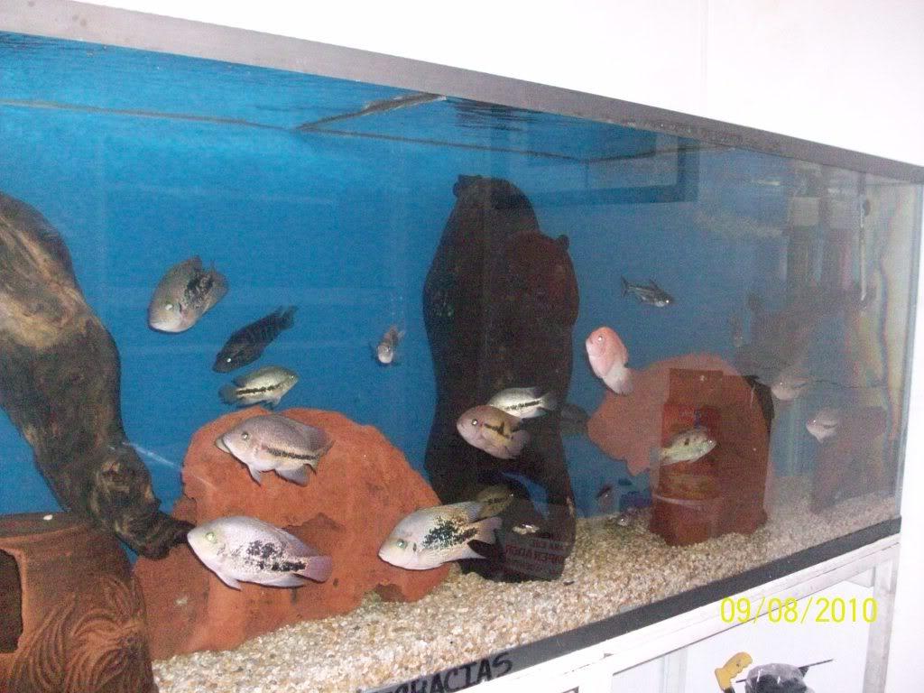 Mis peces 100_2954