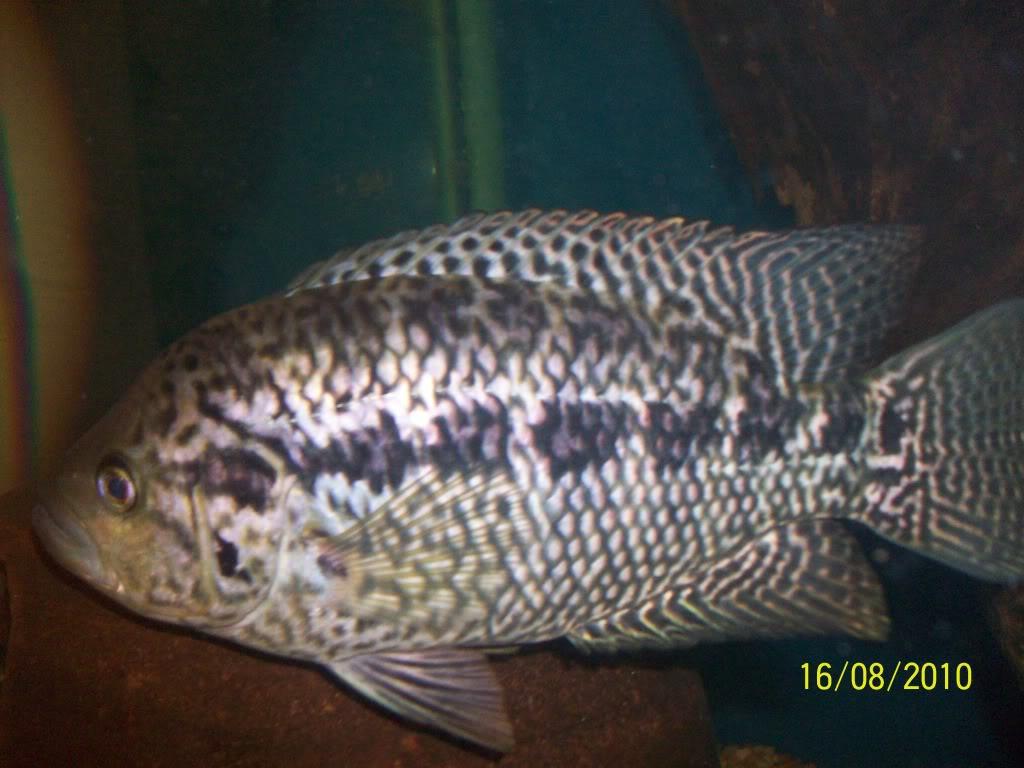 Mis peces 100_3028