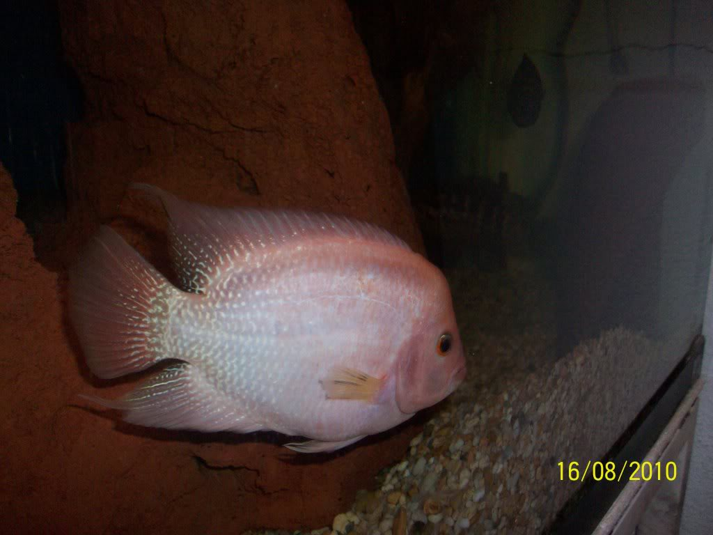 Mis peces 100_3031