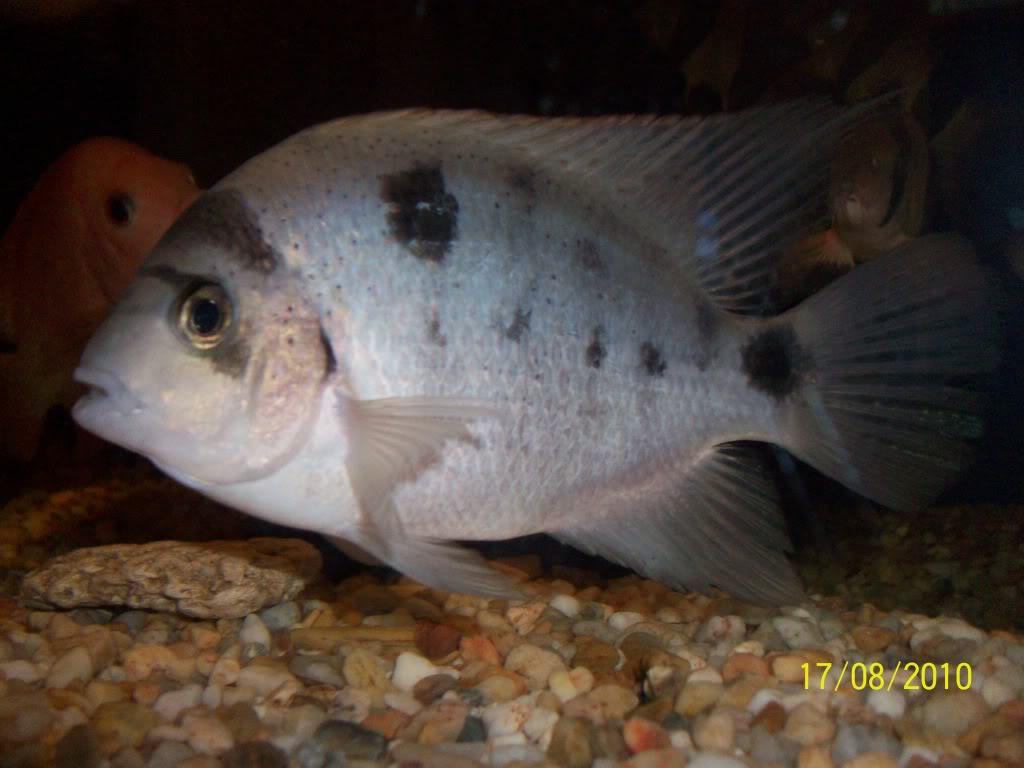 Mis peces 100_3060-1