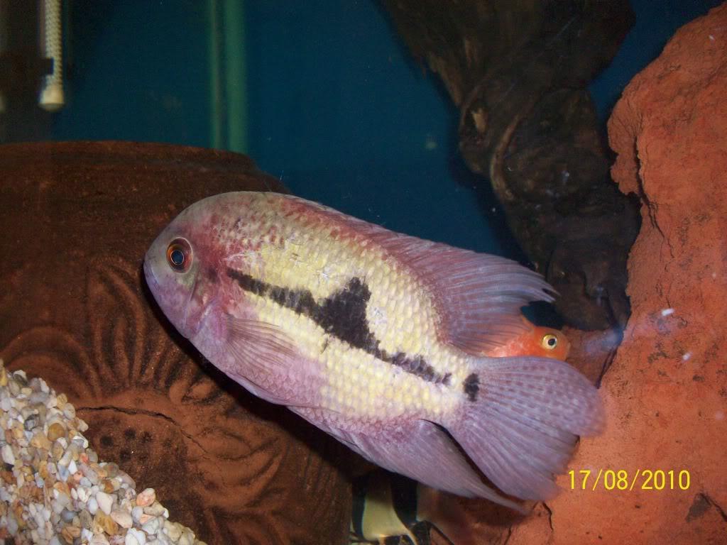 Mis peces 100_3100
