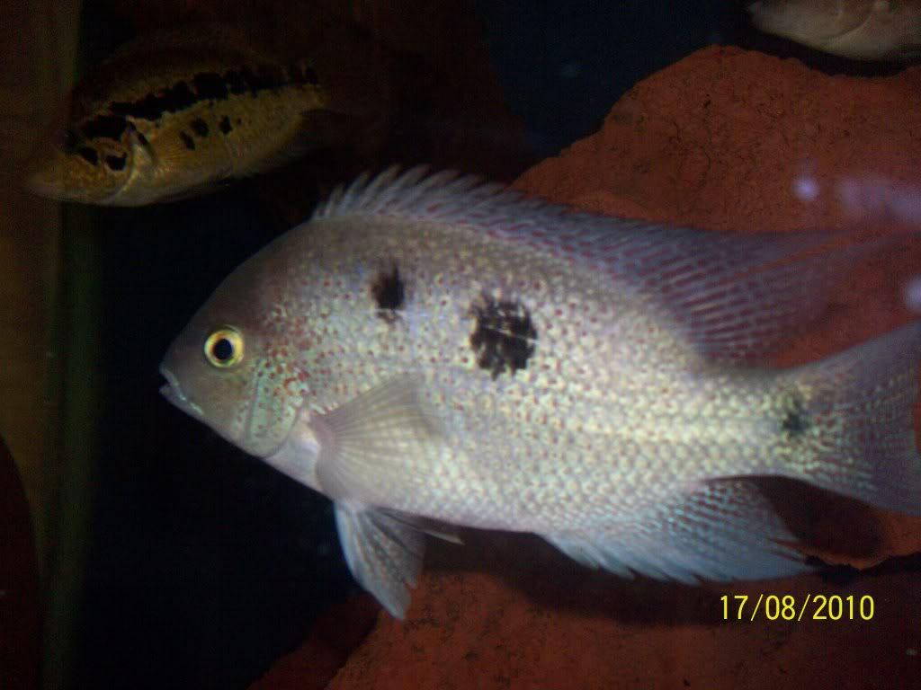 Mis peces 100_3123