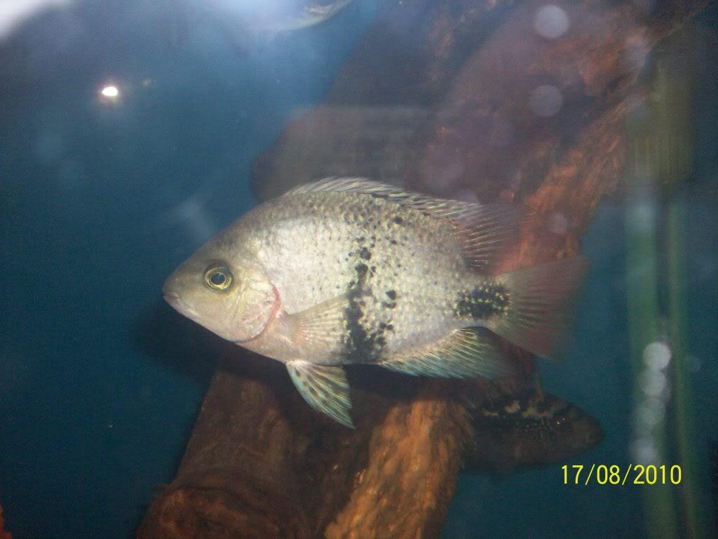 Mis peces 100_3154