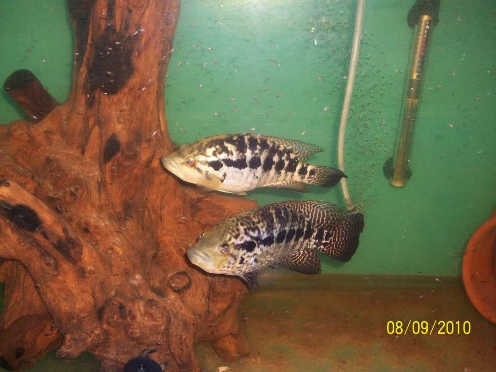 Mi pareja de managuenses 100_3183