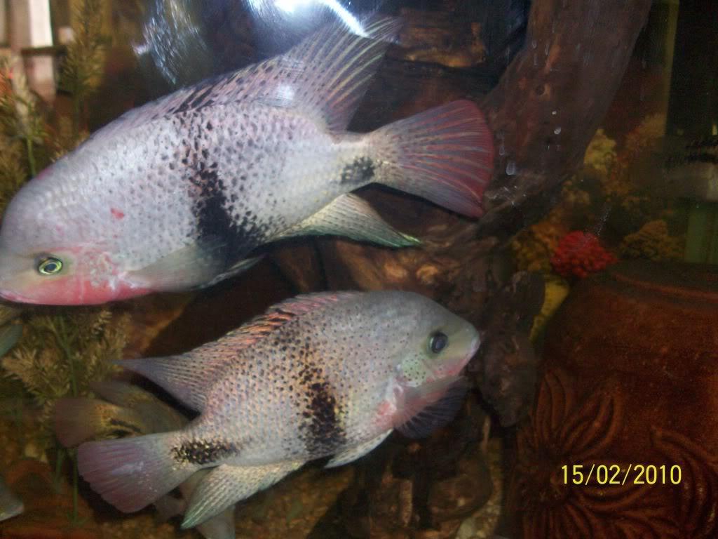 Mis peces 100_1737