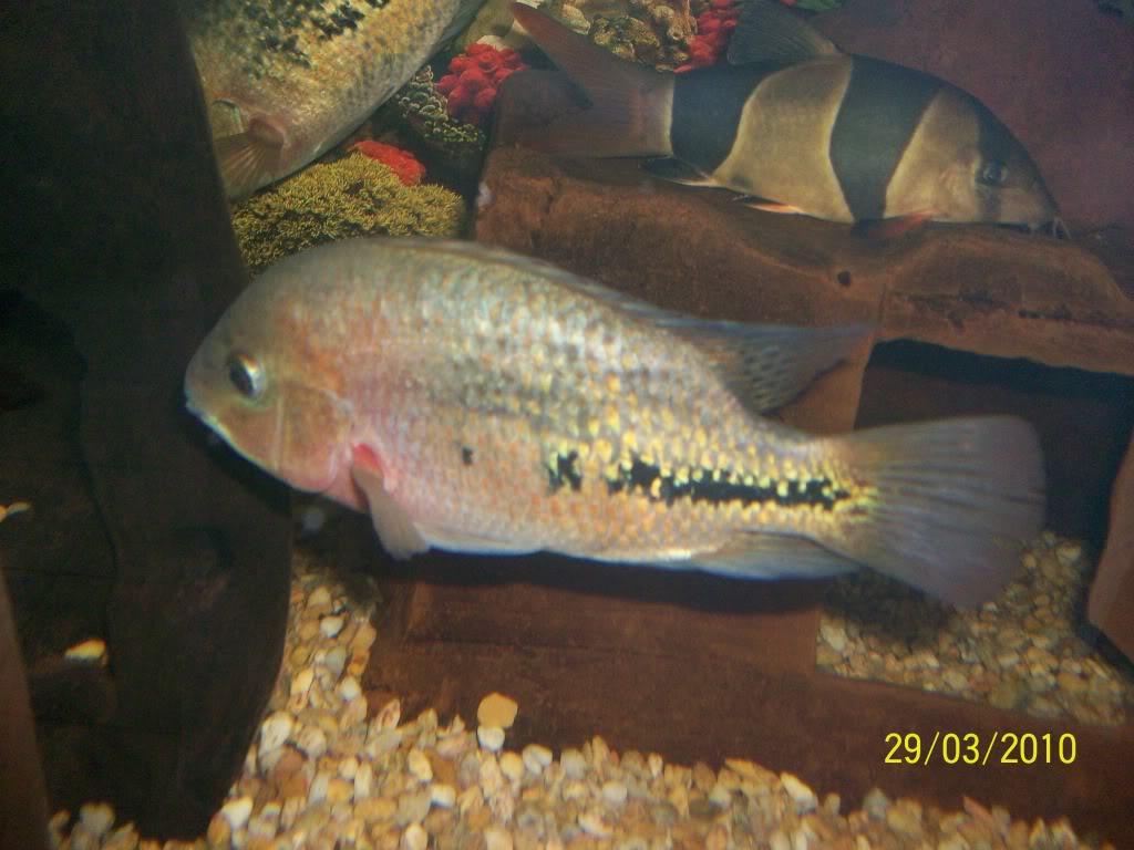 Mis peces Peces029