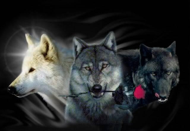 В защиту мужуков.. Wolfswitharose
