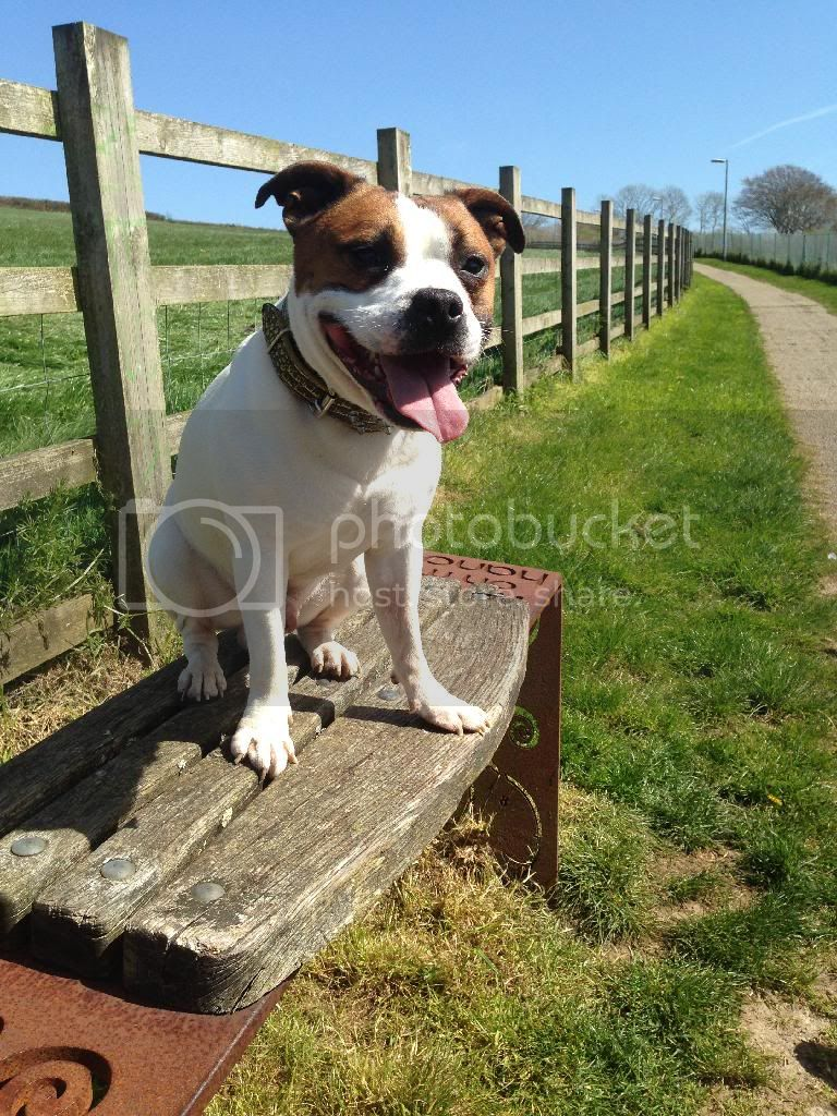 Another lovely walk in the sunshine ! :)  68114454-5E4E-4ABE-B3BF-23AABB2D3AB8_zpsl0umv9aw