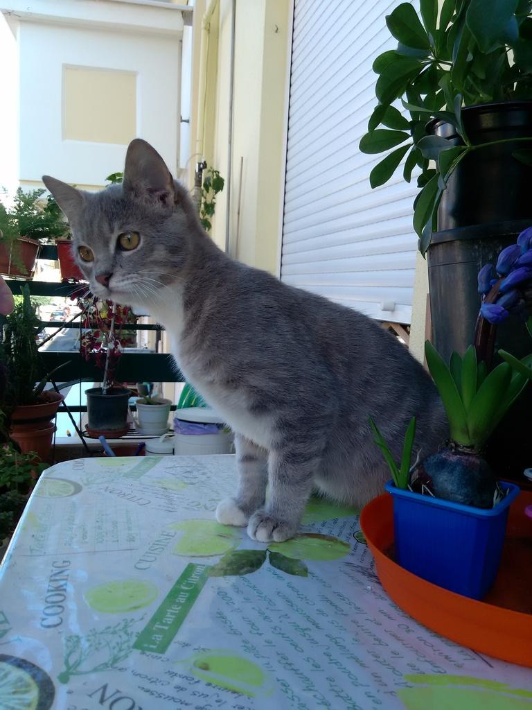 Χουρχουριστός ποντικομικρούλης 3,5 μηνών αναζητά γατογονείς  IMG_20151213_113523