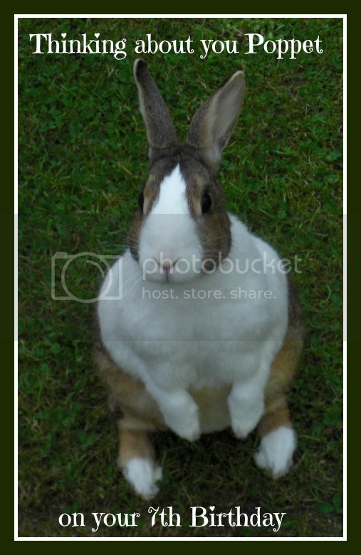 Poppet would have been 7 Years old today. Poppets7thBirthday