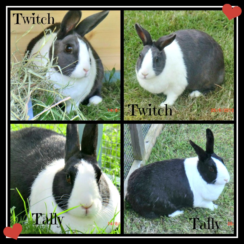 In Memory of Twitch & Tally TwitchampTallyRem