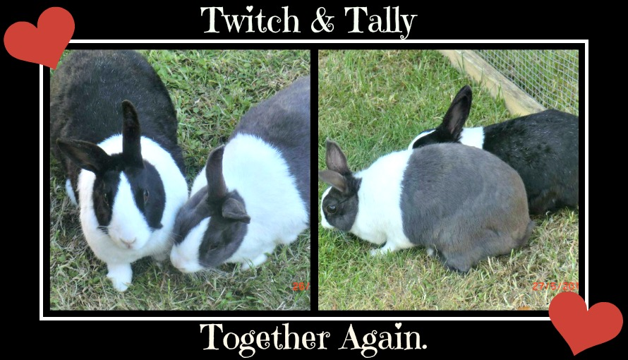 In Memory of Twitch & Tally TwitchampTallyRem3