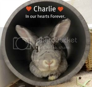 Christmas Remembrance for our Fur Babies. Charlie2rem