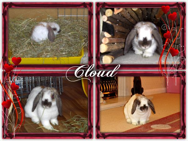 Today Cloud would have been 2 years old. Cloud