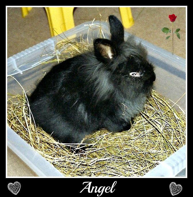 Remembering Angel   December20043-1