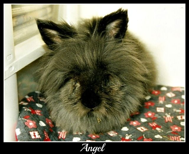 Angel would have been 8 today. Summer20052-1