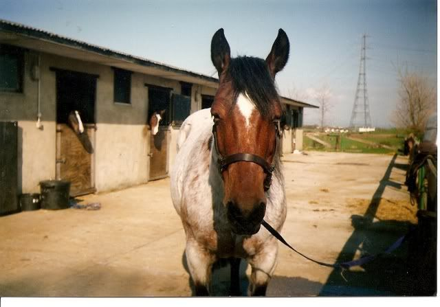 Remembering my Horse Roana. 19873