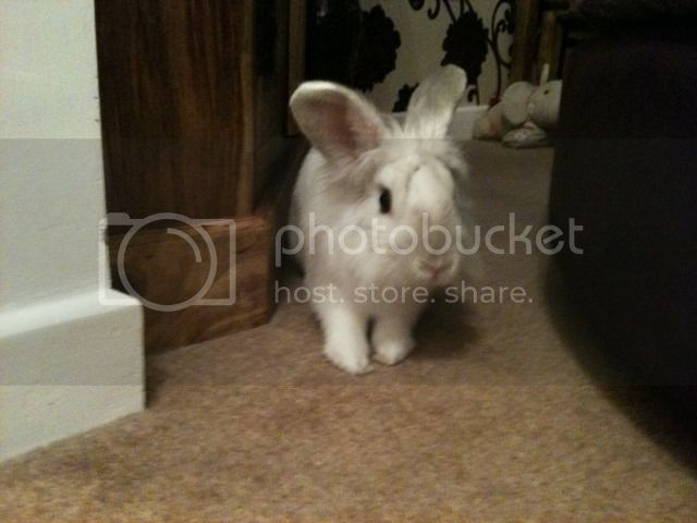 ~ Some More Photos of  Nibbler ~  108