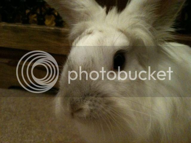 ~ Some More Photos of  Nibbler ~  113