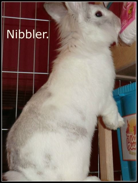 In Memory of Nibbler :-( Nibbler82-4-12