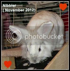 Christmas Remembrance for our Fur Babies. Nibblerrem-4-1211