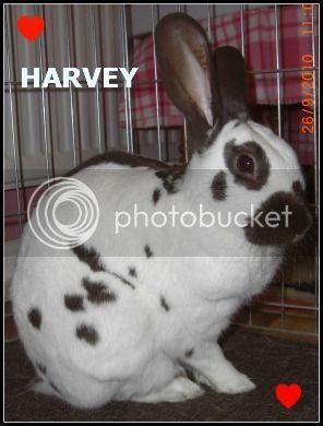 Christmas Remembrance for our Fur Babies. Harveyrem26-9-10015