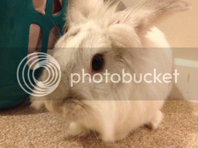 ~ Some More Photos of  Nibbler ~  Photo1