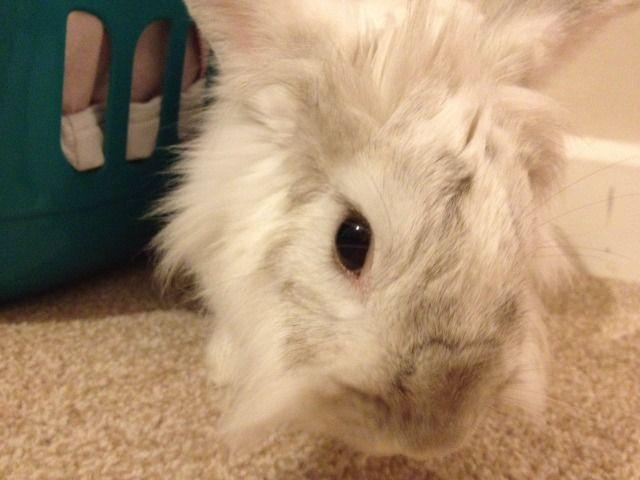 ~ Some More Photos of  Nibbler ~  Photo3