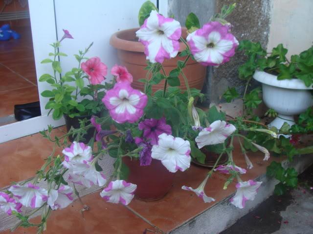 plante de interior ....in gradina ! DSC00879