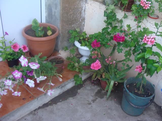 plante de interior ....in gradina ! DSC00881