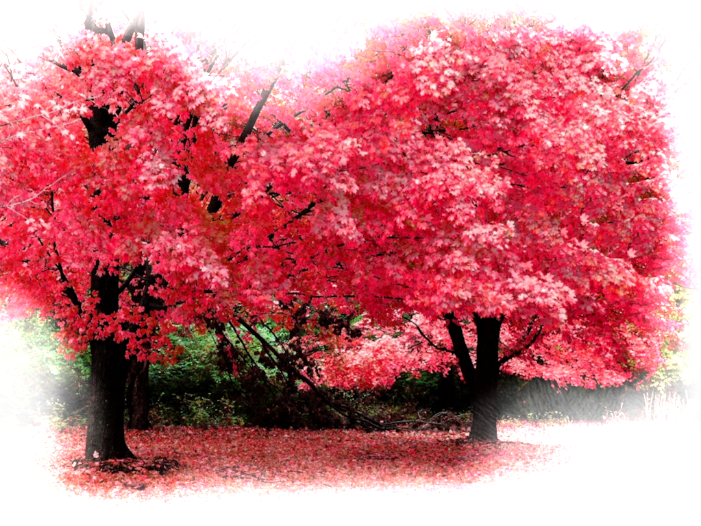 இயற்கை அழகு நிறைந்த காட்சிகள்  - Page 7 Autumn-fantasy-wallpapers_7285_1024x768