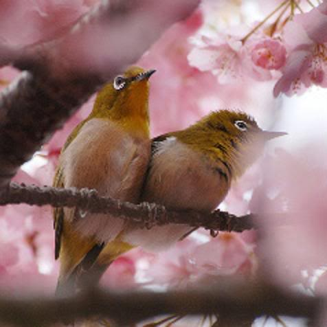 Tajanstvenim stazama duse... - Page 4 Birdsinpinkflowers