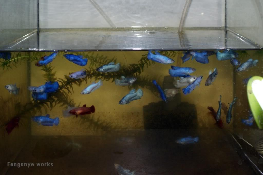 Blue Glaze  002-19