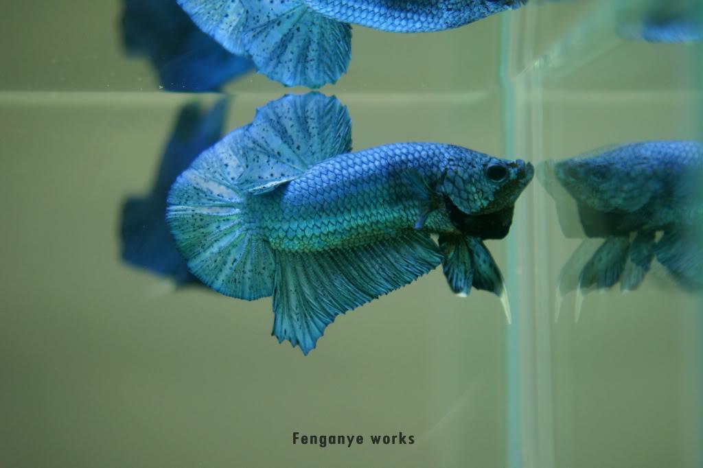 Metallic turquoise hmpk 002-27