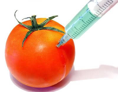 GMO - hrana kao oružije Gmo_Tomato__451868_cut