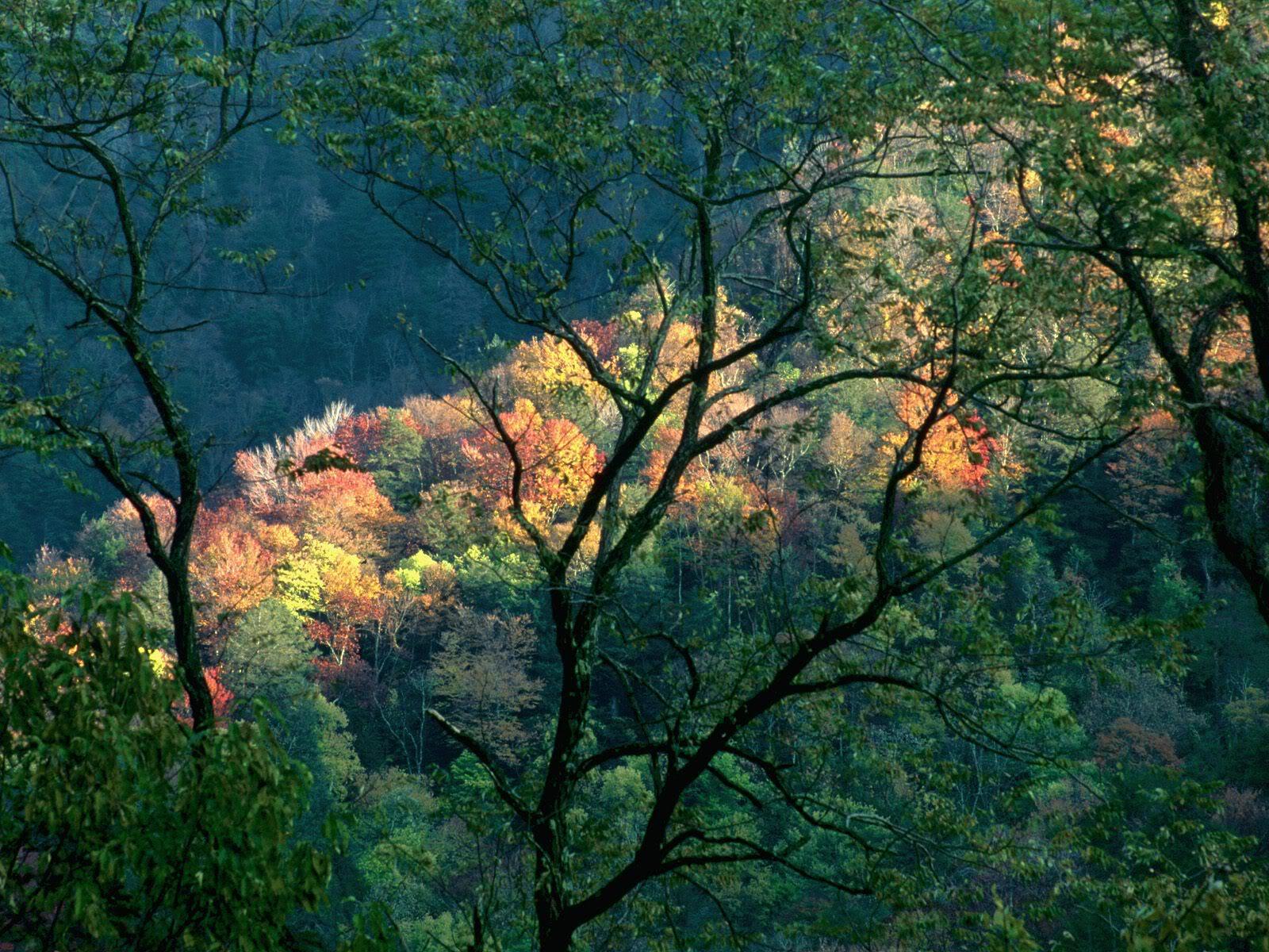 நான் ரசித்த இயற்கை காட்சில் சில உங்களுக்காக....1 - Page 2 AutumnLightGreatSmokyMountainsTenne