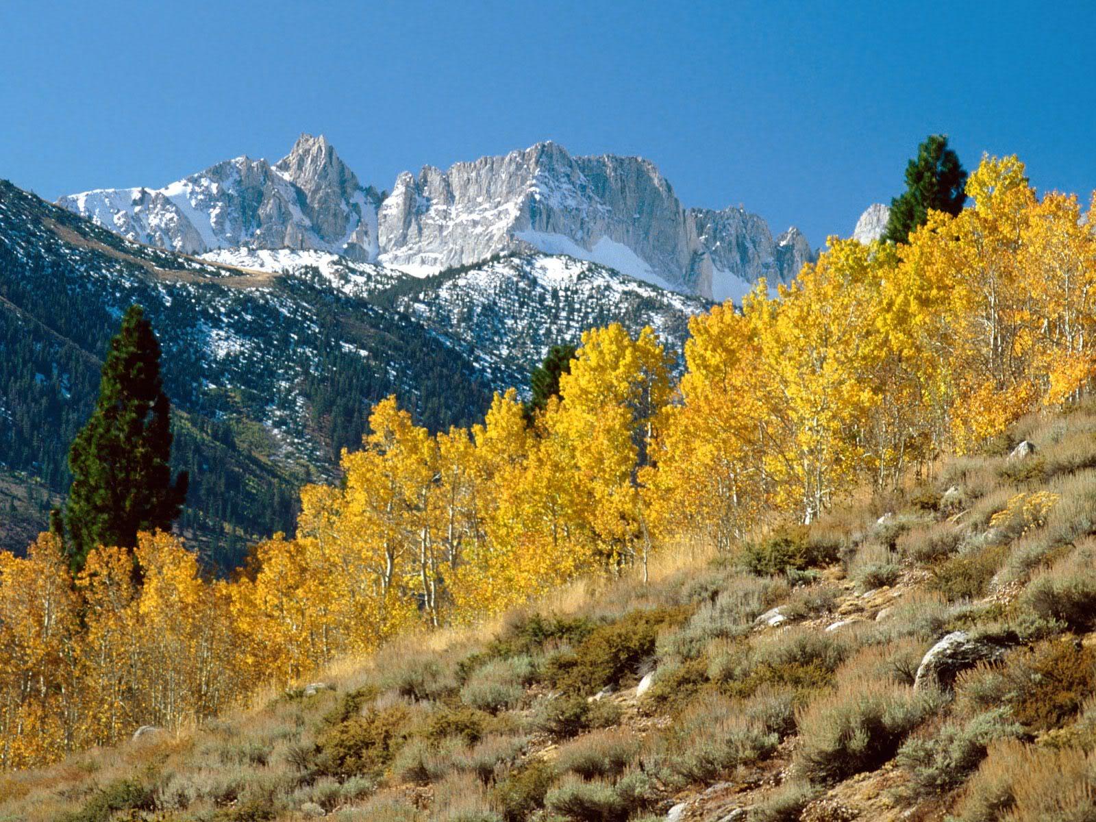 அழகு மலைகளின் காட்சிகள் சில.....02 - Page 22 AutumnatMatterhornPeakSawtoothRange
