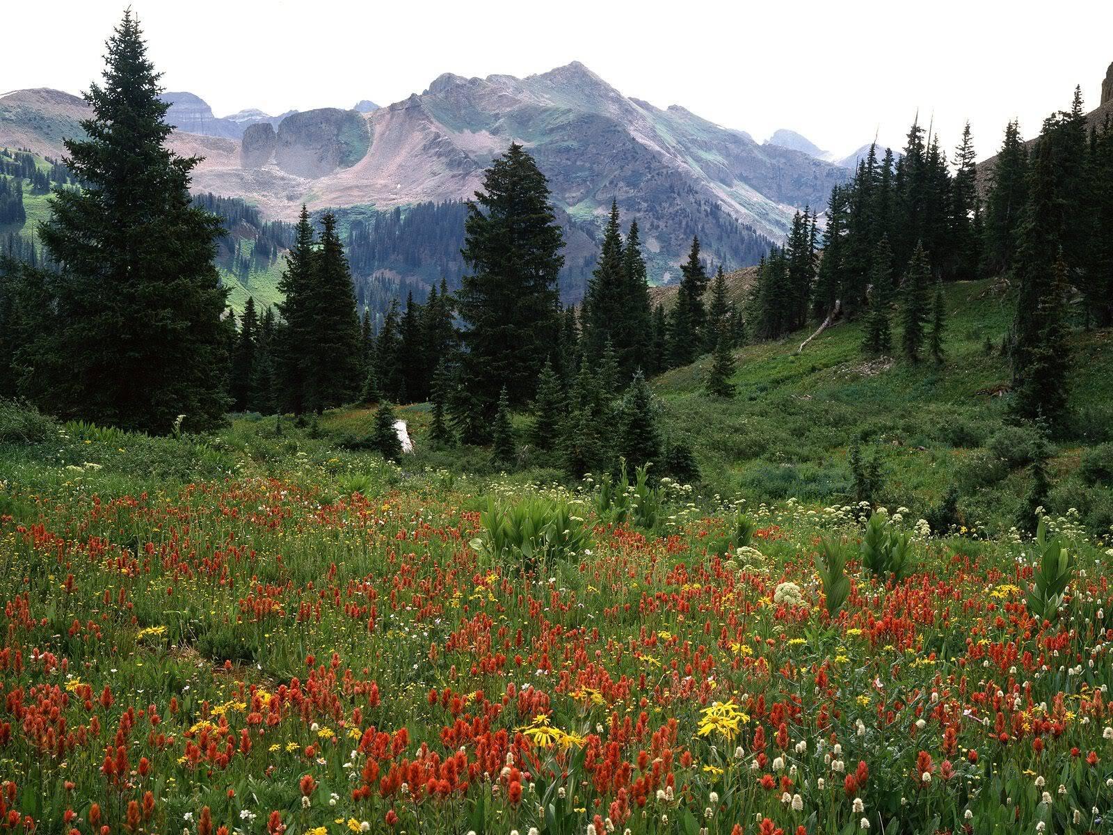 நான் ரசித்த இயற்கை காட்சில் சில உங்களுக்காக....2 - Page 6 BloomingWildflowersLaPlataMountains