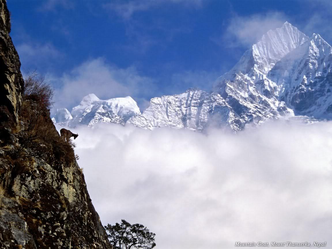 நான் ரசித்த இயற்கை காட்சில் சில உங்களுக்காக....1 - Page 2 MountainGoatMountThamserkuNepal