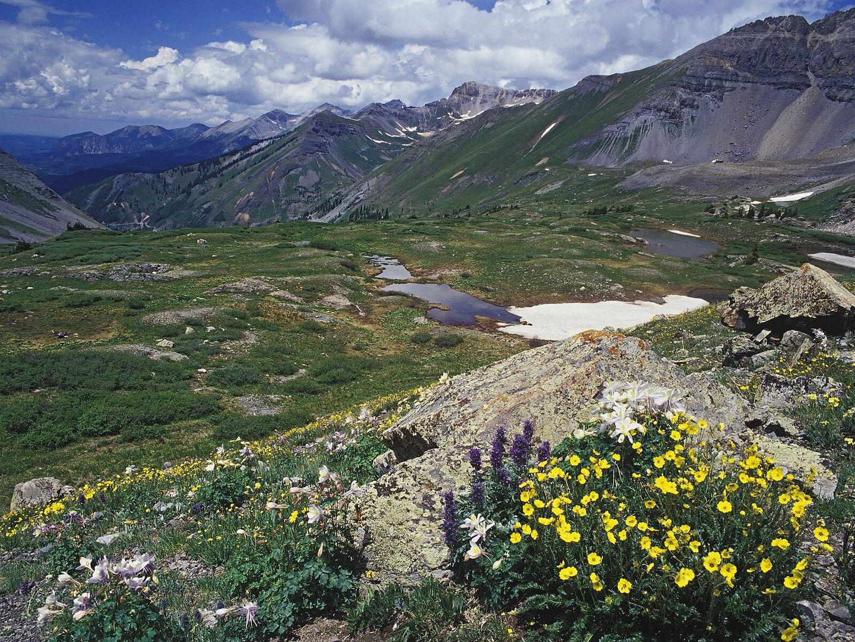அழகு மலைகளின் காட்சிகள் சில.....02 - Page 22 SnowCinquefoilandColoradoColumbineM