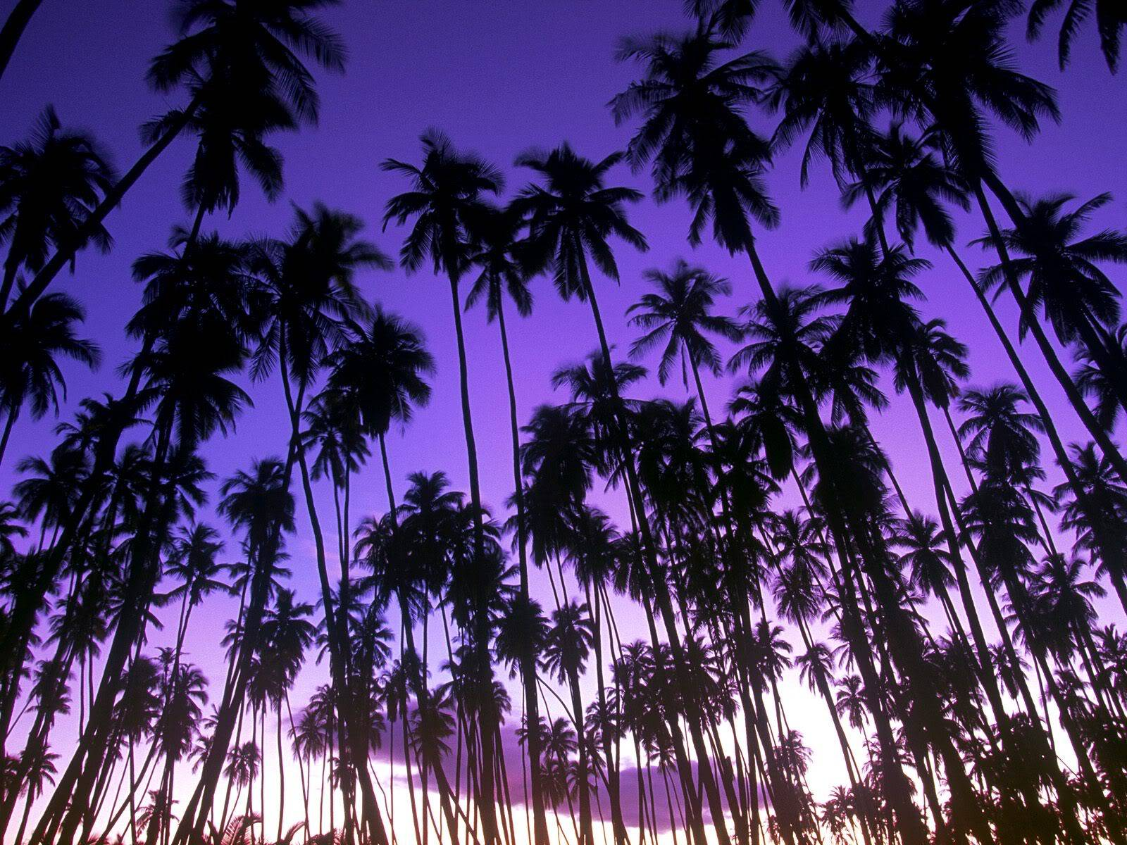 இயற்கை அழகு நிறைந்த காட்சிகள்  HawaiianPalmGrove