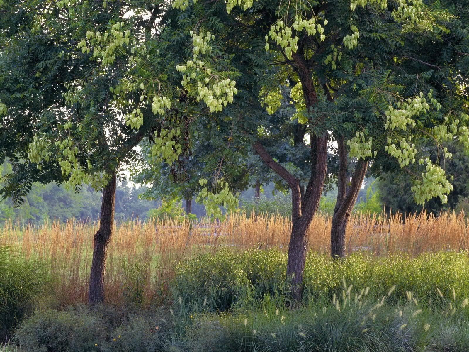 இயற்கை அழகு நிறைந்த காட்சிகள்  RainTrees